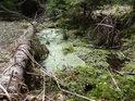 Tam, kde má voda malý, nebo téměř žádný pohyb, dochází k zarůstání hladiny žabincem.