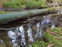 Padlý smrk tvoří přirozenou hať na břehu Vřesovištního potoka.