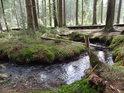Nádherný meandr Vřesovištního potoka, mechem obrostlé břehy dokreslují atmosféru místa.