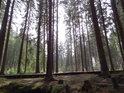 Dřevěný chodník k Velkému mechovému jezírku.