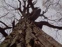 O mohutné stromy v okolí není nouze.
