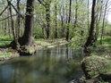 Náhon k Novému rybníku je spořádaně ve svých březích a obklopují ho luhy.