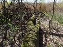 Hezký lužní obrázek, kdy padlý kmen stromu již obrůstá a obklopuje jej loňské listí a vše dokresluje žluté rákosí v pozadí.