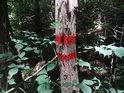 Znak vnější hranice chráněného území na akátu.
