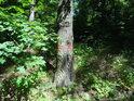 Pata Rokycanské stráně a hraniční znak chráněného území na dubu vedle javorových větví.