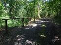 Dřevěné zábradlí u lesní cesty chrání kritický úsek alespoň formálně.