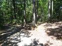 Smíšený les bývá odolnější tak nějak celkově.