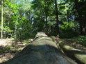 Buková kmen ležící u lesní cesty.