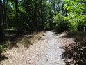 Prosluněná lesní cesta nedaleko hřebene Rokycanské stráně.