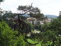 Dosti pokroucená borovice zakrývá výhled na Rokycany.