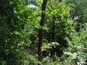 Dolů z Rokycanské stráně je vidět spíše jen málo přes průhledy, jinak výhledu brání vegetace.