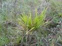 Osamělý trs trávy se svou sytější zelení liší od okolí.