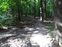Naučná stezka Roztocký háj - Tiché údolí vede přes les.