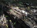 Tlející kmen stromu n slunečním ostrůvku.