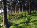 I sázený smrkový les může být za souhry pozitivních okolností velice romantický.
