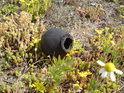 Asi bychom mohli začít psát zprávu o stavu gumových kuliček v národní přírodní památce Semínský přesyp.