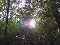 Slunce tu jen pomalu proniká lesním porostem.
