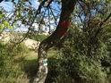 Vnější hraniční znak a zelená turistická značka na jabloni na západní hranici chráněného území Šévy.