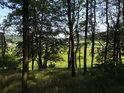 Jihovýchodní část chráněného území je řidší les s průhledy do polí a okolí.