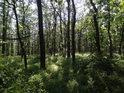Lesní náhorní planinka.