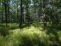 Poněkud vyšší lesní tráva hezky slunečními paprsky osvětlená.
