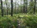 Lesní pěšina obklopená lehce vyšší travou.
