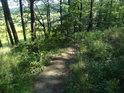 Pěšina po okraji lesa.
