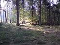 Když sluníčko zavítá do lesa, nejedno srdce zaplesá.