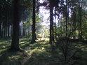 Dřevěný pejsek v trávě, v mysli představit se dá hravě.