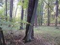 Snad dá se tomu říkat láska, avšak dřevo tu později praská.