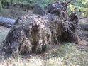 Když v Sítovce leží borovice, v rybníce snad chystá se pijavice.