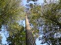 Máme-li tu les smíšený, netřeba tolik krčit rameny.