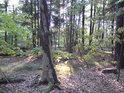 Stromoví ptáci hnízda staví, mládí uprostřed kmenů tráví.