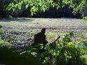 Pohled od lesa na nivu Dědiny, vzadu sbalené seno, tak jak se to v době fotografování nejčastěji dělávalo.