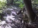 Vyschlý a pravidelně vysychající pravostranný přítok Dědiny vede napříč celou rezervací.
