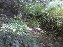 I na dně vysychajícího potoka začíná na nějaký čas rašit život.