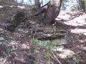 Někdy se může zdát, jako by stromy rostly ze samé skály.