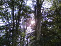 Buky tu někdy své kmeny proplétají a sluníčko dokresluje jedinečnost okamžiku.
