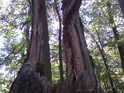 Pahýlem ulomeného stromu lze prohlédnout až k sluníčku.