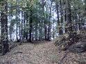 Krátká lesní cesta na severozápadě chráněného území.