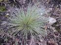 Některé trávy mohou posloužit jako domeček tvorovi co si ten svůj bere pořád s sebou.