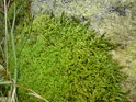 Zeleně je tu opravdu mnoho odstínů, některé i dosti syté.