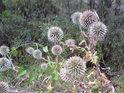 Krása i obavy se mohou navzájem prolínat nejen v rostlinné říši.