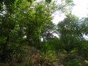 Malé stromy a křoví obrostly Skalku.