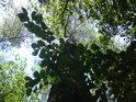 Habry, vrby a topoly, takové je nejčastější stromoví v našich luzích.
