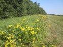 Zlatobýl krášlí vnější, jihovýchodní roh chráněného území Skařiny.