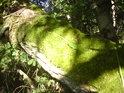 Mechem obrostlý tlející kmen břízy se v mokrém prostředí rychle ztrácí.