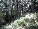 Pěšina po hrázce nad Velenským potokem.