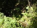 Velenský potok tvoří východní hranici národní přírodní památky Slatinná louka u Velenky.