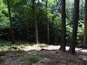 Rozhraní vzrostlého bukového lesa a hustého bukového porostu.